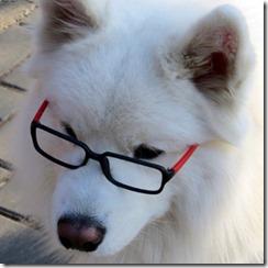 dog pet China