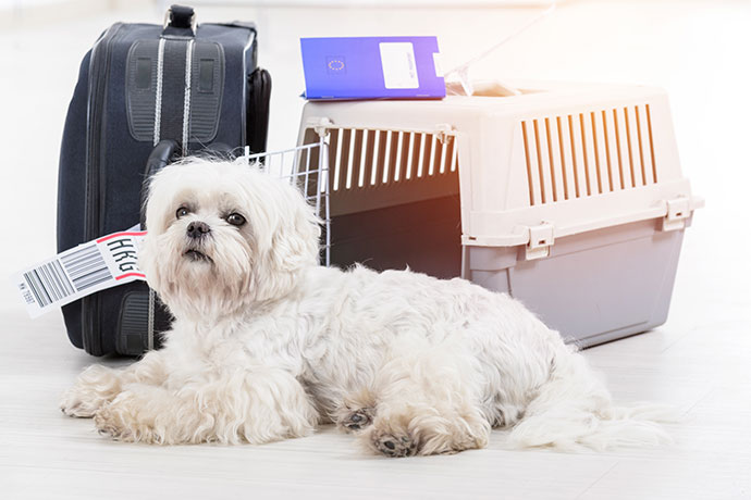 How to Bring Your Pet to China | Expat Guide | Beijing Expat